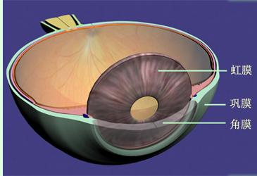 你真的了解眼球吗?华山眼科带你来了解